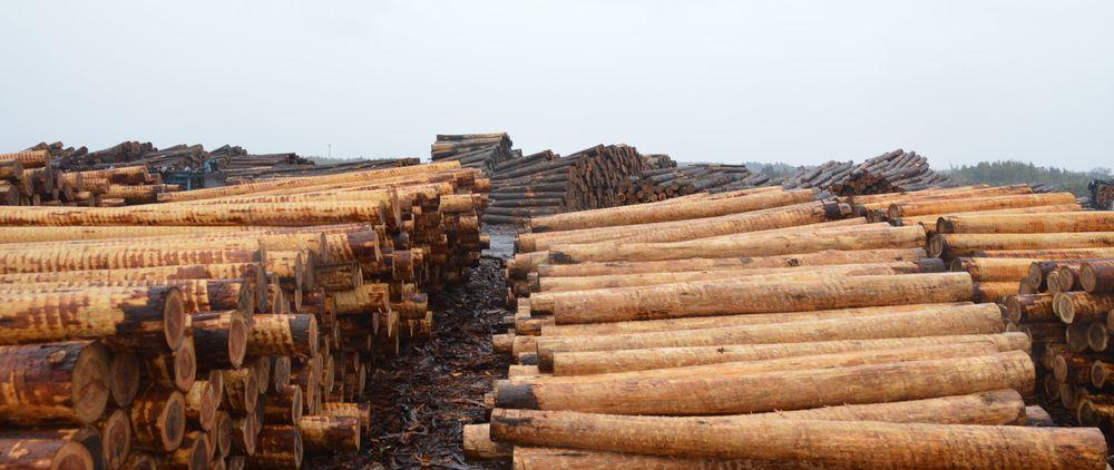 木材産業界インフォメーション誌
